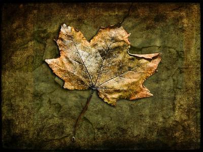 Metallic Leaf 1-LightBoxJournal-Giclee Print