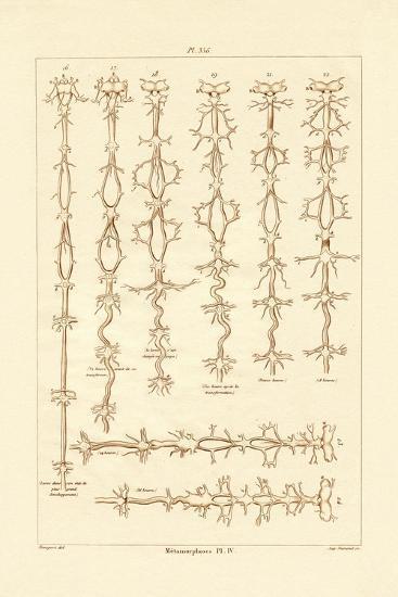 Metamorphosis, 1833-39--Giclee Print