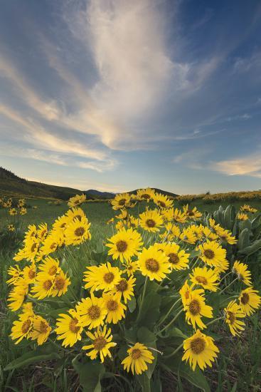 Methow Valley Wildflowers II-Alan Majchrowicz-Photo