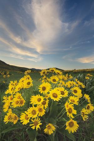 https://imgc.artprintimages.com/img/print/methow-valley-wildflowers-ii_u-l-q1awm7r0.jpg?p=0
