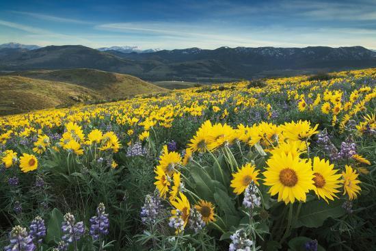 Methow Valley Wildflowers IV-Alan Majchrowicz-Photo