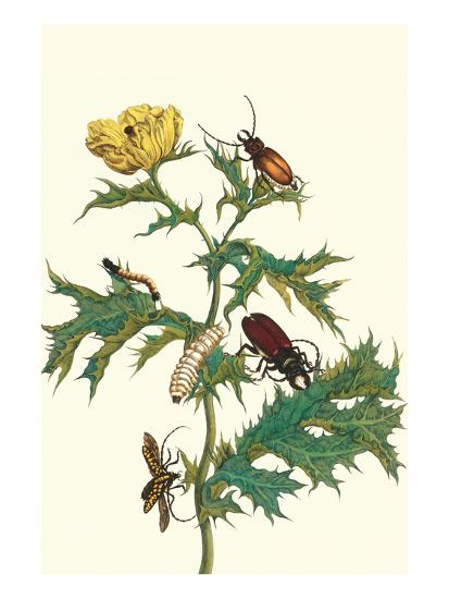Mexican Prickly Poppy a Longhorned Beetle and an Elateridae Beetle Larva-Maria Sibylla Merian-Art Print