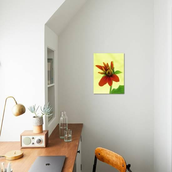 Mexican Sunflower Art Print Wally Eberhart Art Com