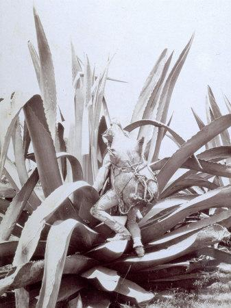 https://imgc.artprintimages.com/img/print/mexican-with-large-skin-container-tied-to-his-back-is-climbing-up-a-huge-agave_u-l-q10sz6g0.jpg?p=0