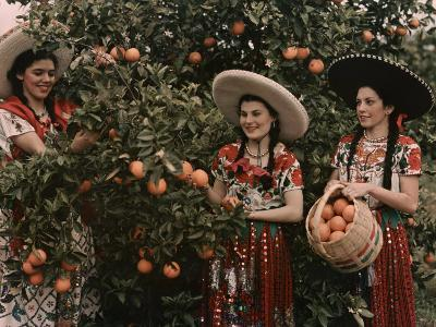 Mexican Women in Native Clothing Pick Oranges-B^ Anthony Stewart-Photographic Print