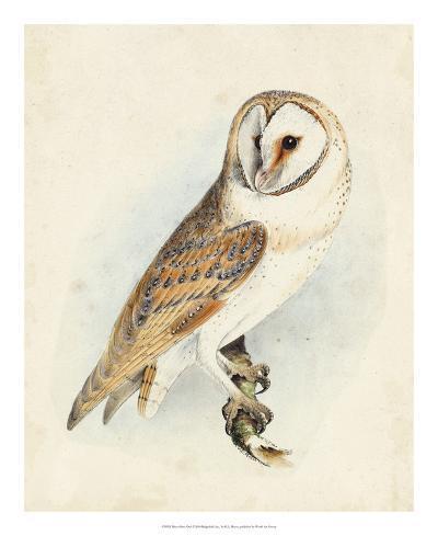 Meyer Barn Owl-H^ l^ Meyer-Giclee Print