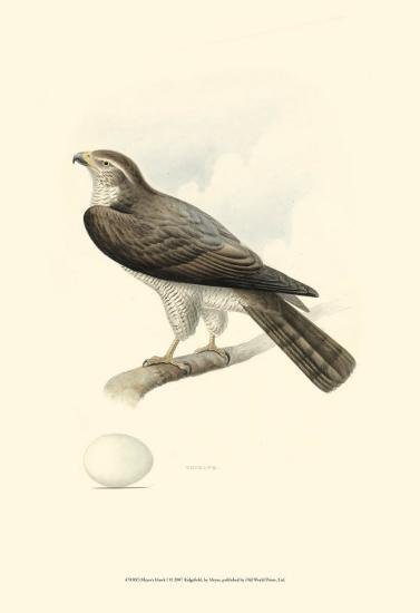 Meyer's Hawk I-Meyer-Art Print