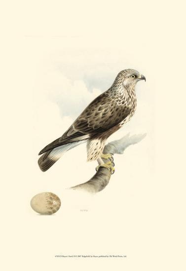 Meyer's Hawk II-Meyer-Art Print