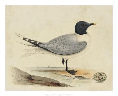 Meyer Shorebirds I-H^ l^ Meyer-Giclee Print