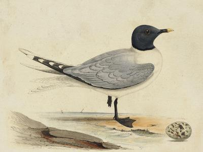 Meyer Shorebirds I-H^ l^ Meyer-Art Print