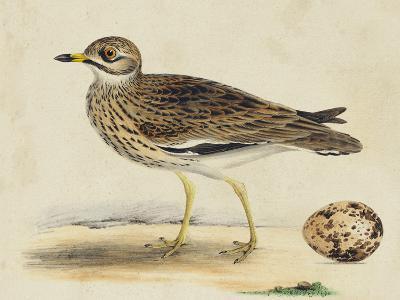 Meyer Shorebirds IV-H^ l^ Meyer-Art Print