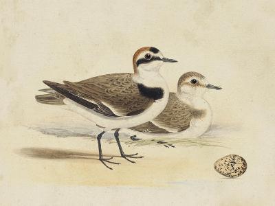 Meyer Shorebirds V-H^ l^ Meyer-Art Print