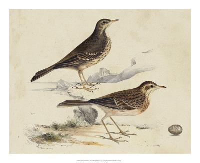Meyer Shorebirds VI-H^ l^ Meyer-Giclee Print