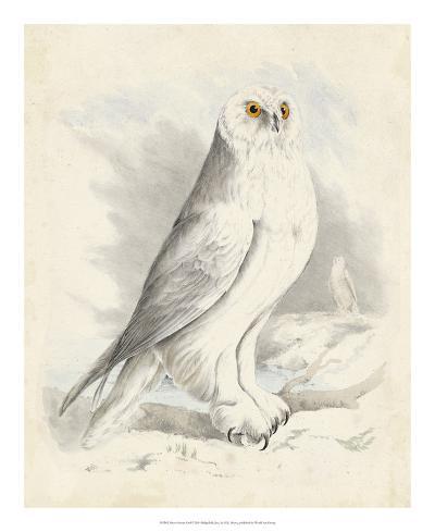 Meyer Snowy Owl-H^ l^ Meyer-Giclee Print