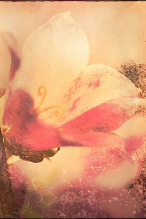Conceptual Floral Images