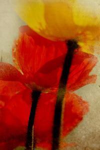 Glowing Poppies I by Mia Friedrich