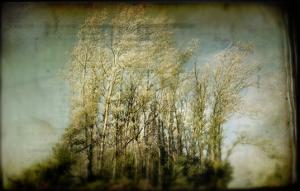 Grove of Trees by Mia Friedrich