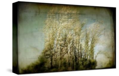 Grove of Trees