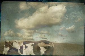 Horse in Field by Mia Friedrich