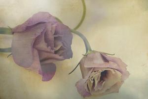 Lisianthus I by Mia Friedrich