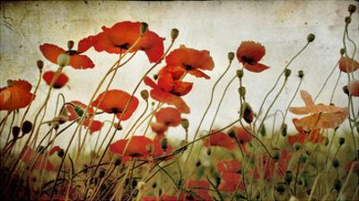 Orange Flower Patch by Mia Friedrich