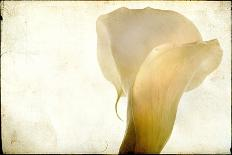 Horse in Field-Mia Friedrich-Photographic Print