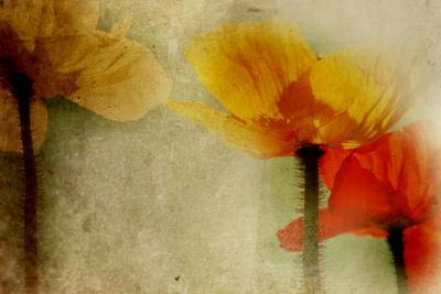 Poppies Talking