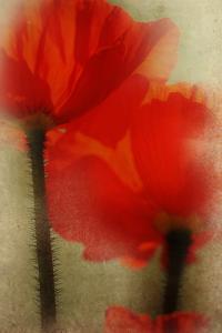 Poppy Sisters by Mia Friedrich