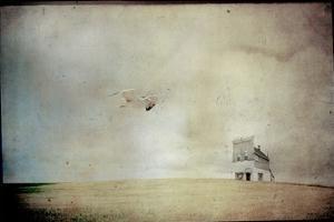 Soaring by Mia Friedrich
