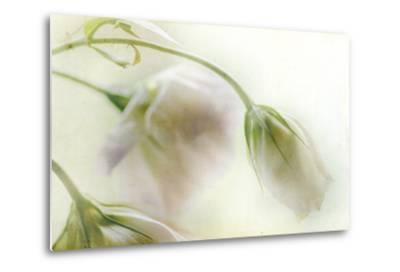 Study of Wilting White Flowers