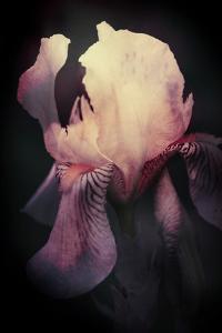 The Passion of Iris by Mia Friedrich