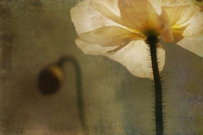White Poppy with Little Friend by Mia Friedrich
