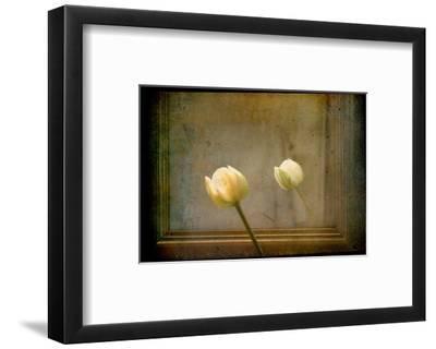 White Tulip against Framed Mirror