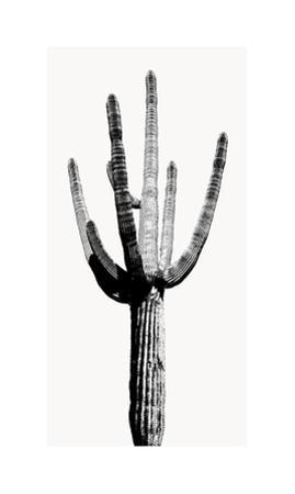 Saguaro Black & White I by Mia Jensen