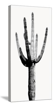 Saguaro Black & White I