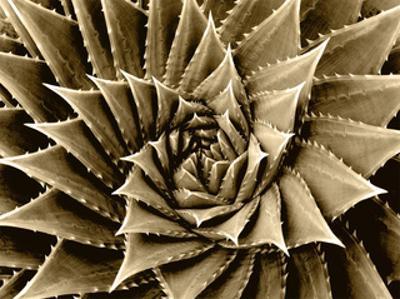 Succulent Taupe I