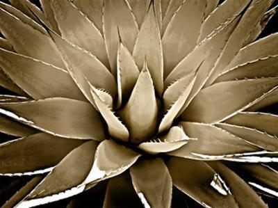 Succulent Taupe III