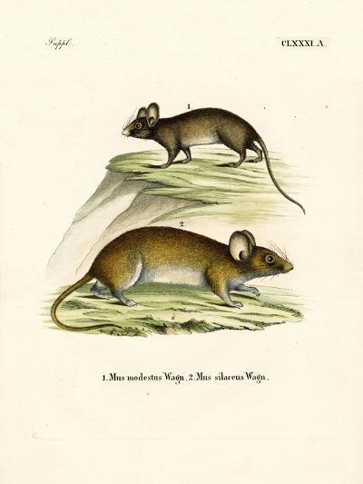 Mice--Giclee Print
