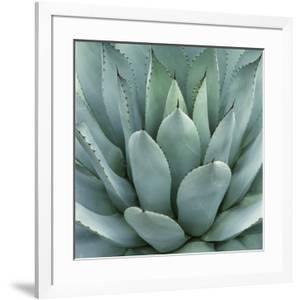 Agave Plant by Micha Pawlitzki