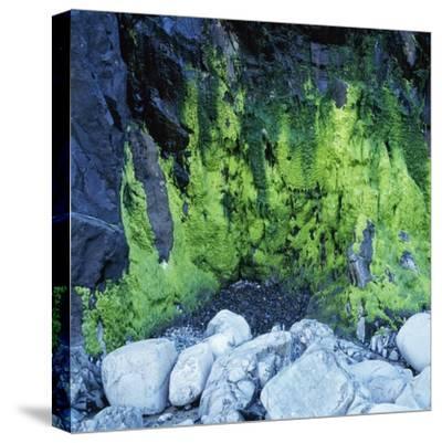 Algae Growing on Rock Cliff