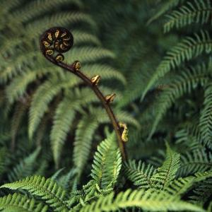 Caterpillars on a Fern by Micha Pawlitzki