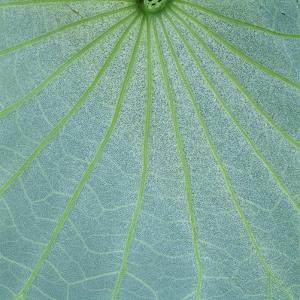 Closeup of Leaf by Micha Pawlitzki