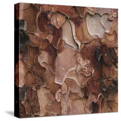 Closeup of Tree Bark