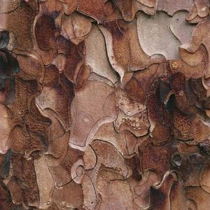 Closeup of Tree Bark by Micha Pawlitzki