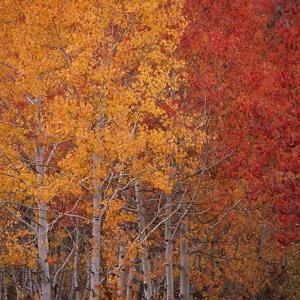 Deciduous Trees in Autumn by Micha Pawlitzki