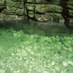 Green Rocks and River by Micha Pawlitzki