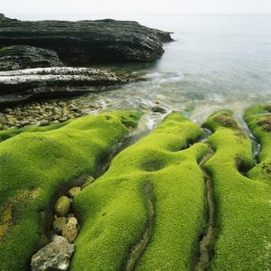 Moss Covered Rocks on Beach in Japan by Micha Pawlitzki