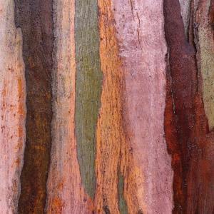 Sedimentary Strata by Micha Pawlitzki