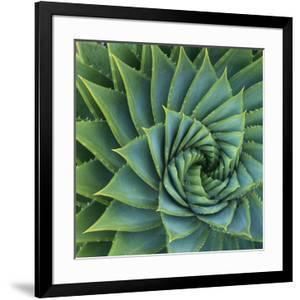 Succulent with Spiked Leaves by Micha Pawlitzki
