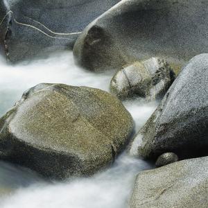 Westland National Park, South Island, New Zealand by Micha Pawlitzki
